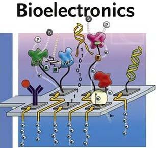 Bioelectronics Paul R Berger